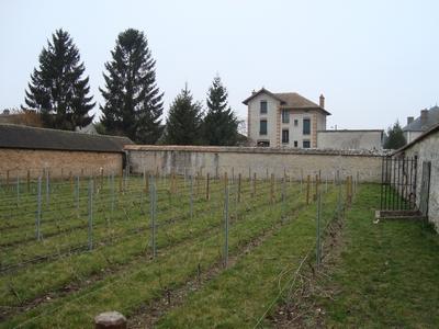 vigne-debut-2011
